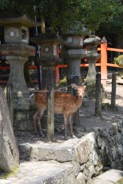 The historic city of Nara is known for its deer parks.