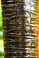 Textured bark