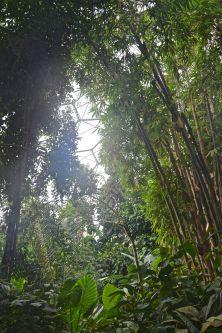 Inside the tropics